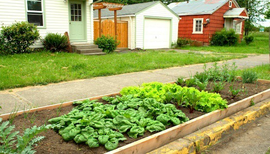9 Online Resources for Aspiring Urban Homesteaders