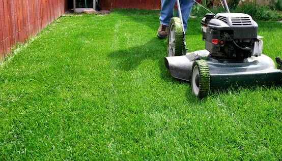 yard lawn maintenance