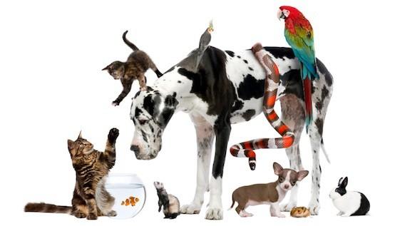 Should You Buy Pet Insurance? :: Mint.com/blog