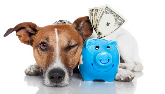 6 Potential Tax Breaks for Pet Owners :: Mint.com/blog