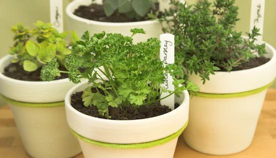 How to Start a Spring Garden On the Cheap :: Mint.com/blog