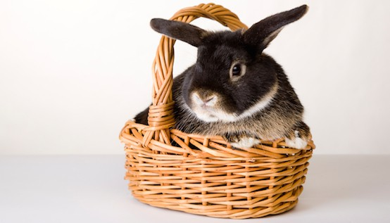 DIY Easter Treats for Everybunny's Basket :: Mint.com/blog