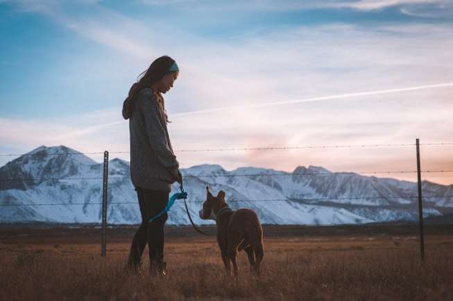 4 Alternatives to Pet Ownership copy