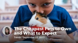 Sep 22 The Cheapest Pets to Own and What to Expect