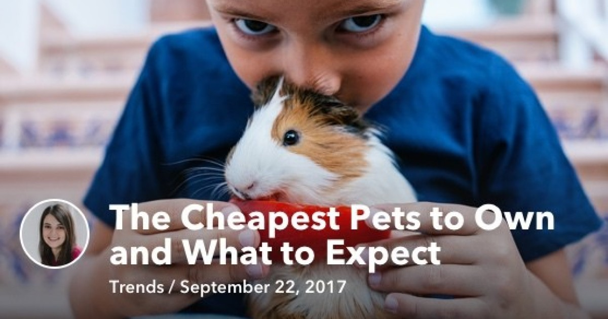 Cheap Pets By Zina Kumok