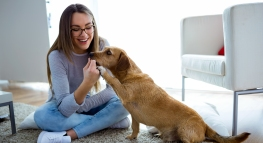 Tips for Pet Owners: How to Always Get Your Deposit Back