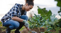 Gardening Tips That Save You Green